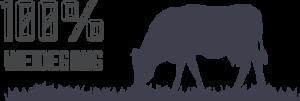 100-weidegang-beemster-koeien